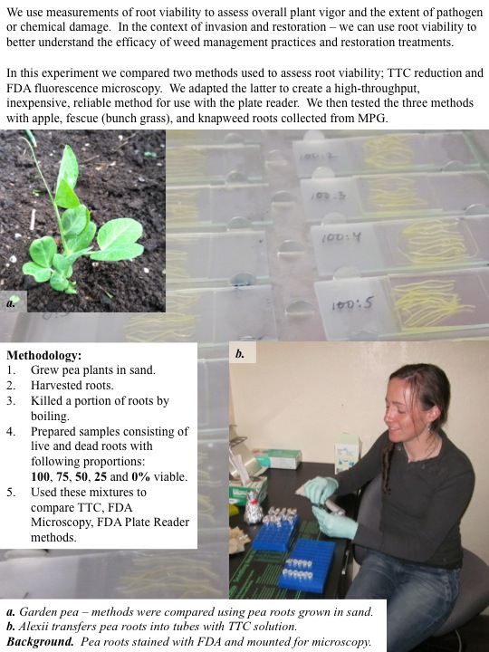In this experiment we compared two methods used to assess root viability; TTC reduction and FDA fluorescence microscopy. We adapted the latter to create a high-throughput, inexpensive, reliable method for use with the plate reader. We then tested the three methods with apple, fescue (bunch grass), and knapweed roots collected from MPG.